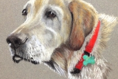 A photo of the final pastel painting of the white lab is sent via email to the client for final approval before any money is exchanged. If a client is ever not satisfied with the final piece, they are under no obligation to buy it.